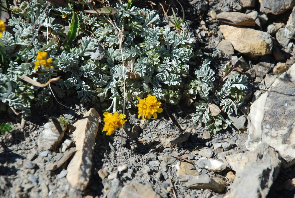 Randonnees Et Flore Des Alpes